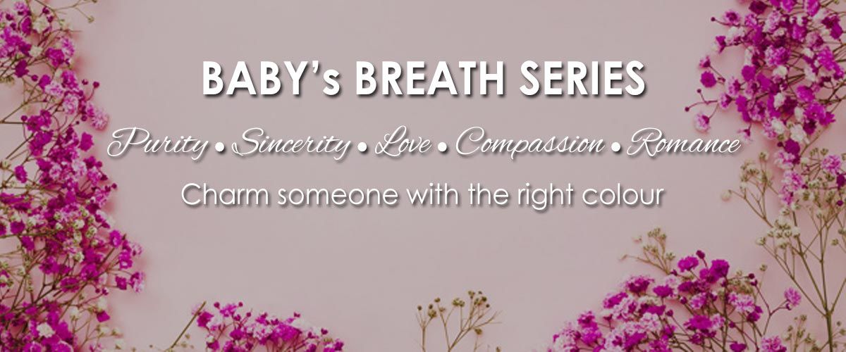 Baby Breath Bouquets & Arrangements