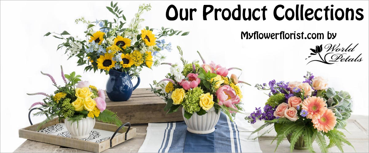 Our Product Collections