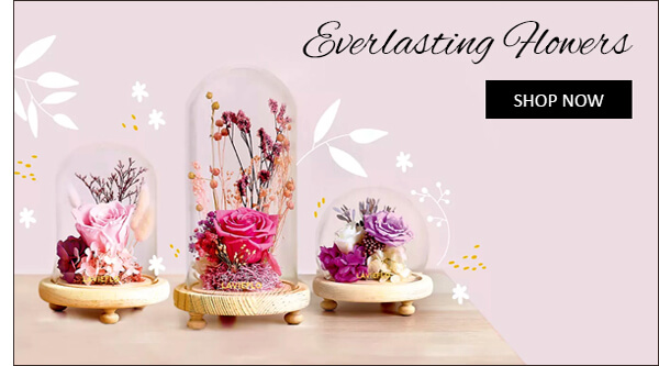 Everlasting Preserved Flowers