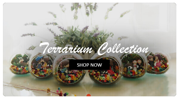 Terrarium Collection