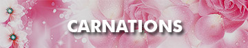 Send Carnations To Malaysia