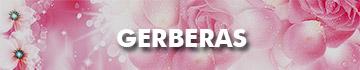 Send Gerberas To Malaysia