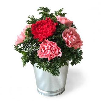 Dainty Carnations