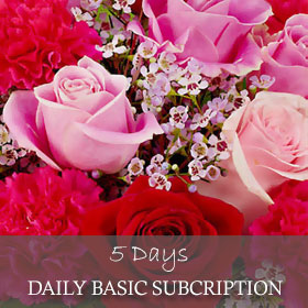 Daily Basic Subscription (5 Days)