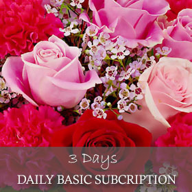 Daily Basic Subscription (3 Days)
